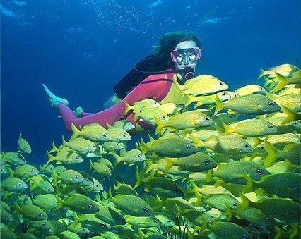 Victory Reef Bimini