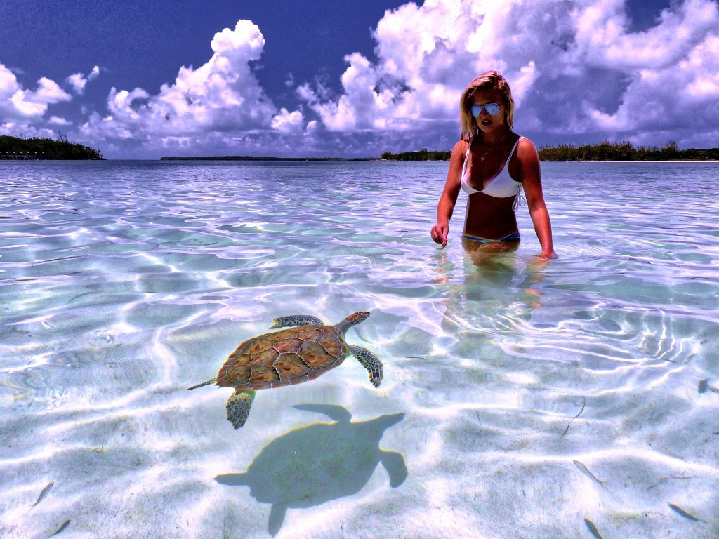 Swimming with Turtles at Green Turley Cay, Bahamas