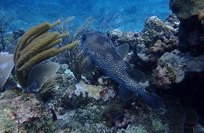 usvi diving
