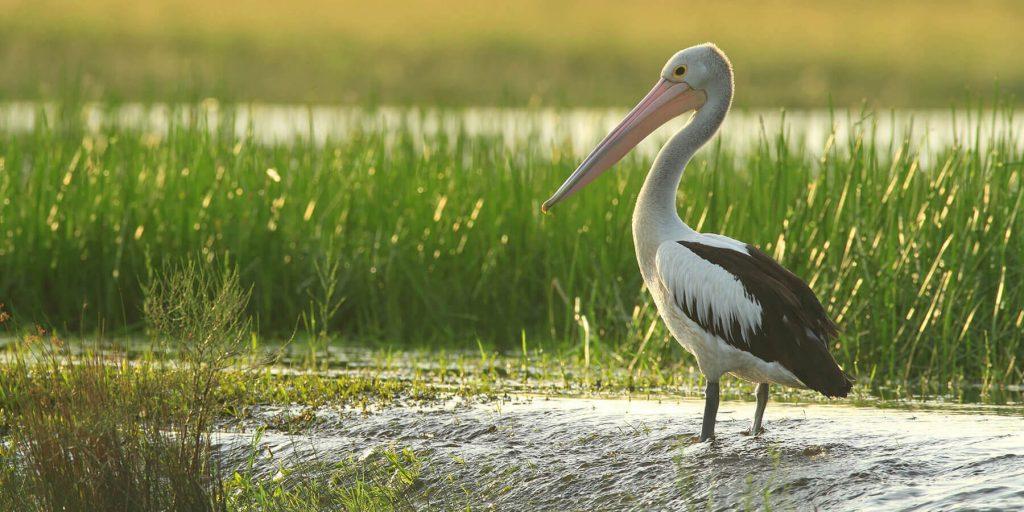 chesapeake wildlife
