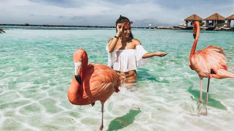 flamingos in aruba
