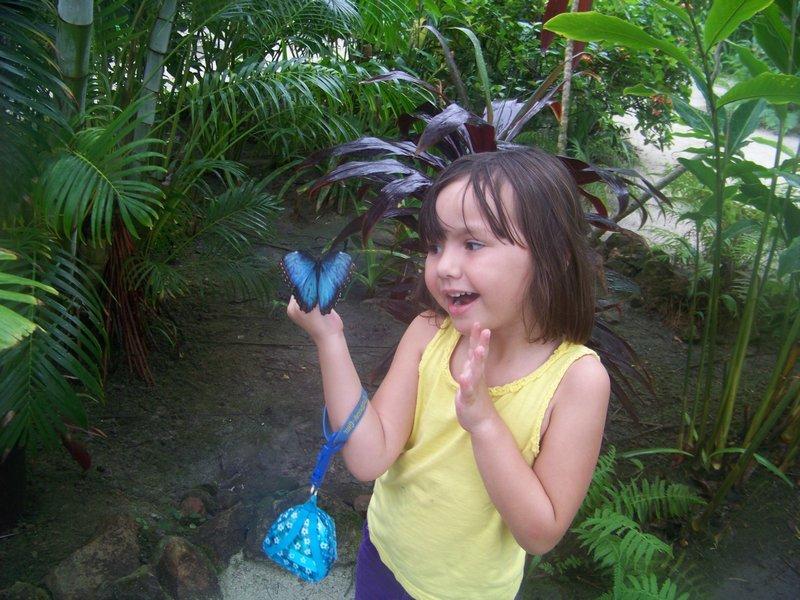 butterfly farm st martin