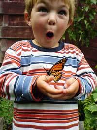st martin butterfly
