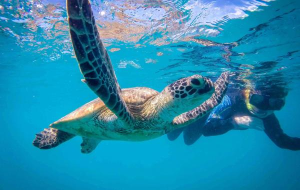 tintamarre turtles