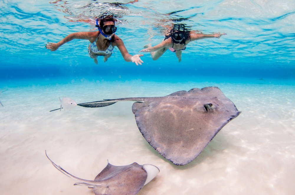 snorkelling with rays