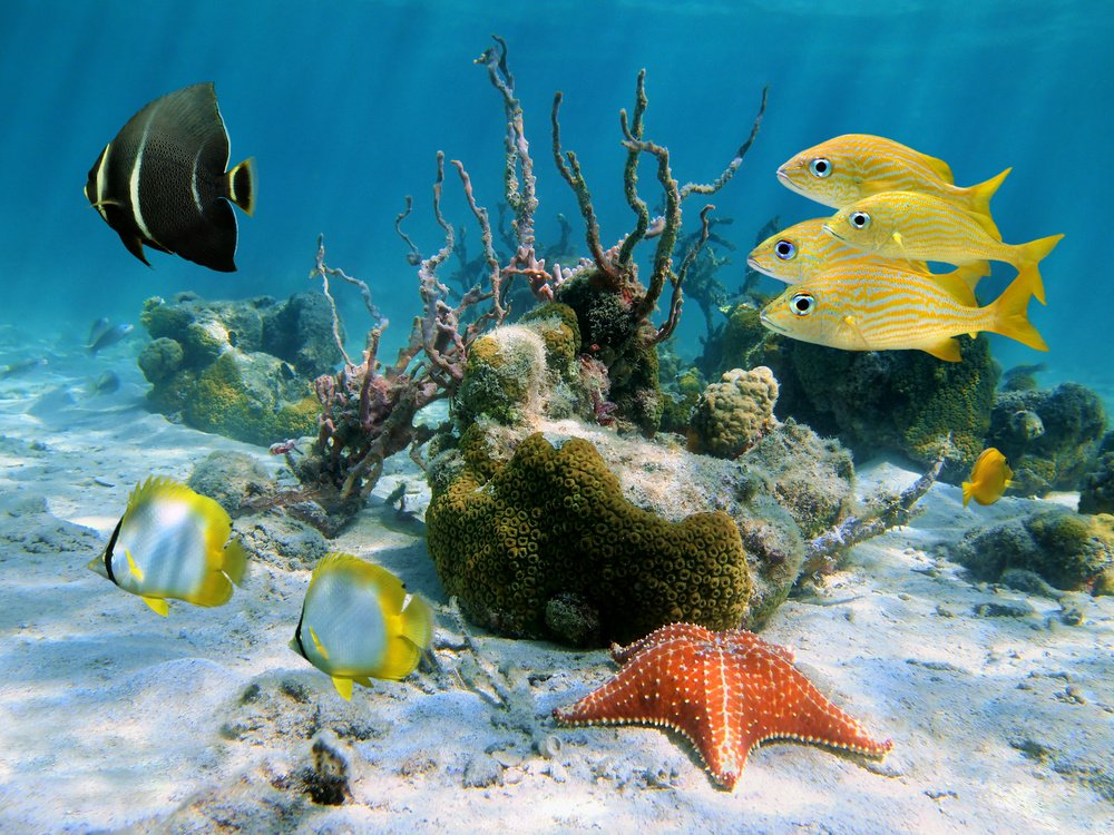guadeloupe diving vacations